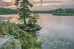 Pine Meadow Sunrise
