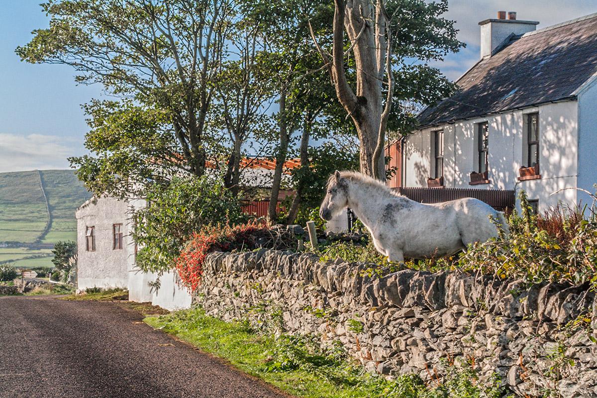 Cottage Pony