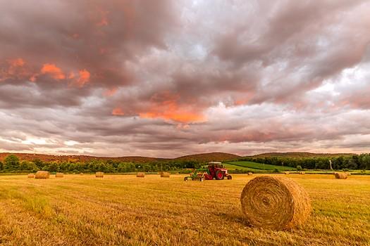 Firey Sky, Buckbee Farm