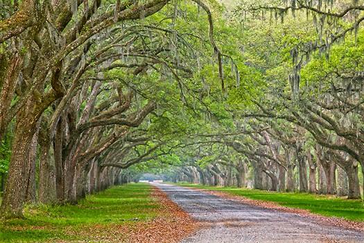 Wormslow Oak Lane