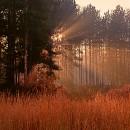 Morning Forest Light