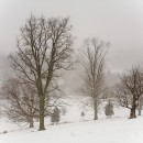Pasture Snowfall