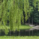Through the Willow, Storm King