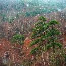 Shawangunk Snowfall