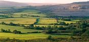 Burren Pastures