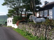 Cottage Horse