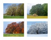 Oak Tree Seasons