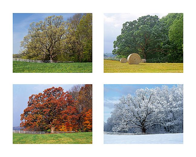 Oak Tree Seasons