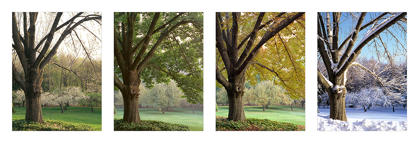 Orchard 4 seasons