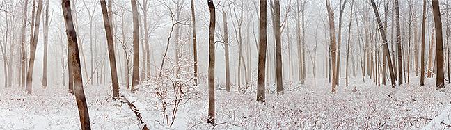 White Woods Panorama