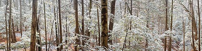 Zen Woods Panorama