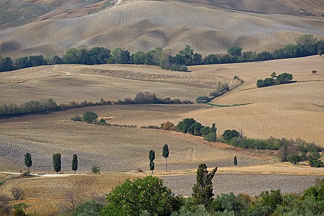 Plowed Landscape