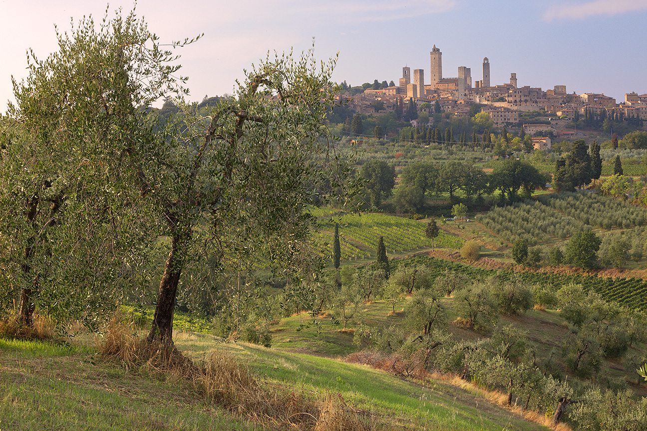 San Gimignano Orchard
