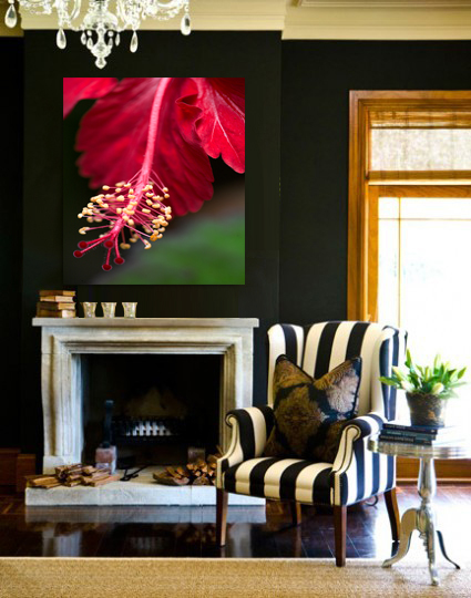 """Red Hibiscus"" Canvas on contrasting wall."