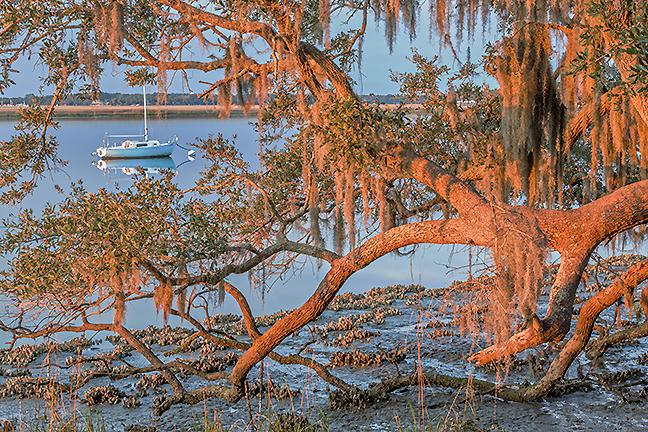 Bending Oak & Boat
