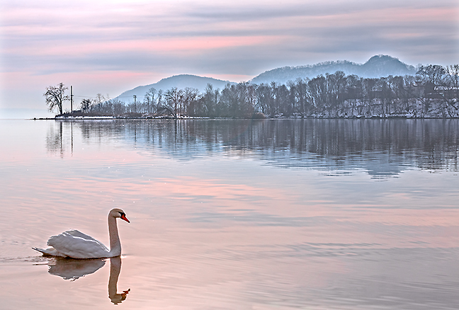 Haverstraw Bay Swan