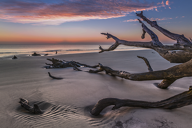 Driftwood Beach, Jekyll Is